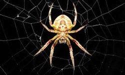سم عنکبوت درمانی برای بیماری صرع