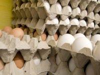فروش تخممرغ دولتی، تزریق مُسکن موقف به بازار است