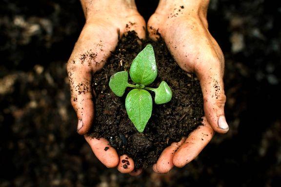 کاهش 50درصدی تولید با ورود سازمانهای غیرتخصصی به حوزه کود و سم/ لزوم ارجاع دوباره ماده9 لایحه حفاظت از خاک به کمیسیون کشاورزی