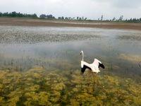 کم آبی، زندگی پرندگان مازندران را تهدید میکند