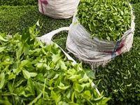 تعیین تکلیف نرخ خرید تضمینی برگ سبز چای تا 15روز دیگر/ طرح تحویل صنعت چای در دست تدوین