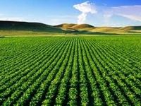 ضرورت تاسیس واحدهای بازرگانی سهامی خاص در تعاونیهای روستایی