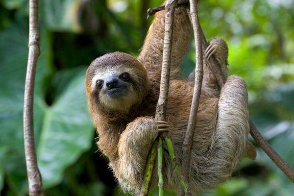 روز تنبلترین موجودات روی زمین +عکس