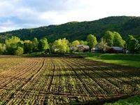 انتشار ۹۵۰۰ میلیارد اسناد خزانه برای کمک به بخش کشاورزی و سلامت