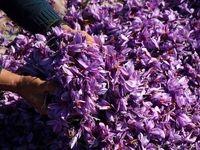 بازدید هیات مدیره بورس کالا از سه انبار زعفران بورسی در مشهد