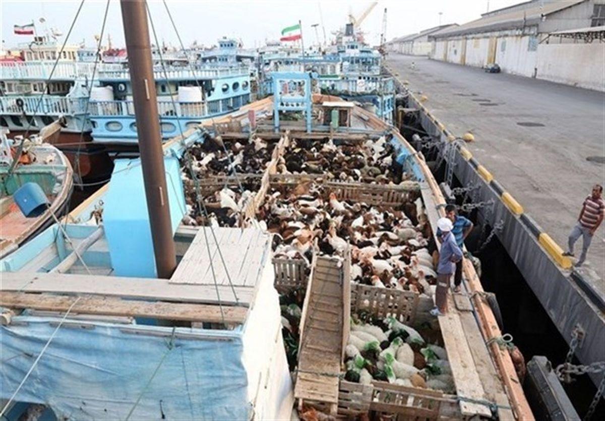 توقیف بزرگترین محموله قاچاق دام به کشورهای حوزه خلیج فارس