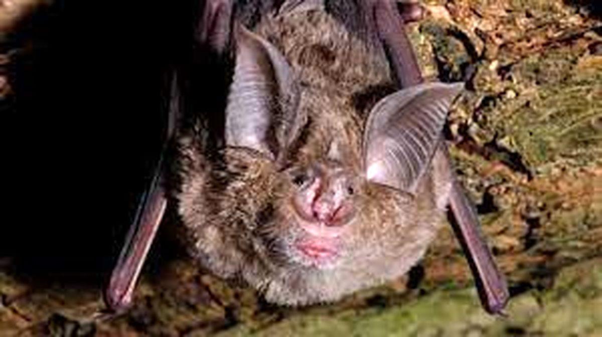 لحظه ورود ویروس کرونا به سلول های مغزی خفاش