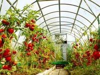رشد ۴۵درصدی توسعه گلخانه در کشور از سال۹۲/ سهم اندک ایران از ۱۰۰میلیارد دلار ارزش محصولات گلخانهای در جهان/ آزاد سازی ۱۹۰هزار هکتار از اراضی مرغوب کشاورزی با توسعه کشت گلخانههای