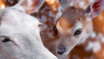 ابراز عشق حیوانات بیشتر از انسانهاست؟! +عکس