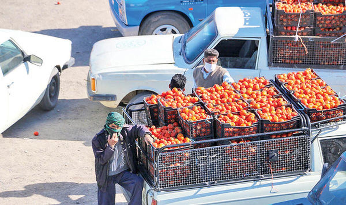 قیمت گوجه سر زمین؛ ۱۵۰۰ تومان