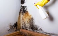 مهمانان ناخوانده و خطرناک روی دیوارهای خانه