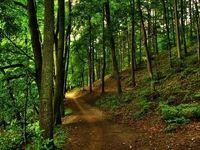 کسی به فکر جنگل ها نیست