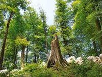 نفس بریدهای به نام جنگل