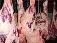 عرضه دولتی گوشت تازه کیلویی ۳۱ هزار و ۵۰۰ تومان