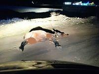 6مصدوم در برخورد پراید با اسب