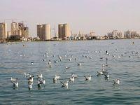 ضدعفونی کردن دریاچه چیتگر در 3نوبت