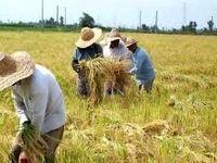 کشاورزی کدام استانها بیشترین آسیب را از سیل دید؟