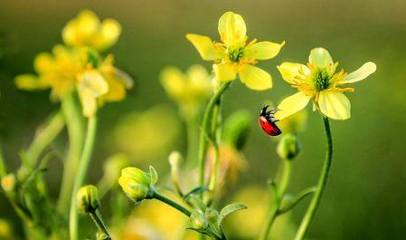 بهار فصل تجدید حیات به روایت تصویر