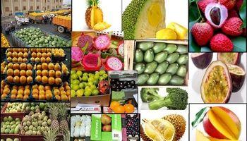به حق میوههای نخورده +عکس