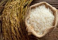محدودیت کاشت برنج خارج از استانهای شمالی