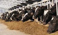 رشد قیمت خوراک دام در بازارهای جهانی