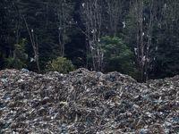 تصاویری دردناک از جنگل زیبای سراوان