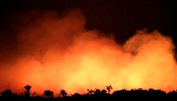 ریههای زمین در حال سوختن است +تصاویر