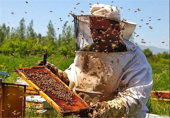 عسل آذربایجان غربی با برند ترکیه