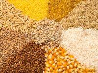 آخرین وضعیت خرید گندم، برنج و کلزا اعلام شد
