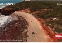 کشف ردپای بزرگترین دایناسورها در استرالیا +فیلم