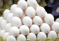 فروش تخممرغ دولتی آغاز شد