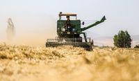 کشاورزی سنتی دستش به خون تنوع زیستی آغشته است