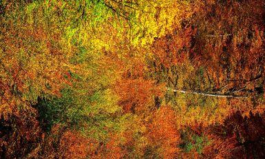 طبیعت پاییزی رویاییترین جاده جنگلی کشور