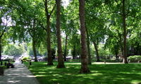تاثیر فضاهای سبز شهری بر سلامت روان افراد مسن