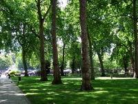 افزایش سرانه فضای سبز در مناطق کم برخوردار شهر