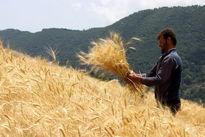 به واردات گندم نیاز نداریم