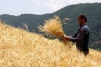 نگاه کشاورزان به حمایتهای دولت برای کشت پاییزه