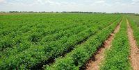 پیش بینی خودکفایی کشاورزی در سال جاری