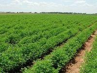 چشمانداز کشاورزی ایران تا ۲۰۲۹