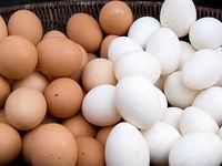 عرضه تخم مرغهای غیربهداشتی در سطح شهر