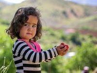 برداشت توت فرنگی در کردستان +تصاویر