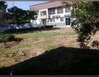 ماجرای تصاویر قطع درخت در محوطه شهرداری منطقه 18تهران