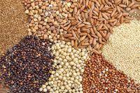 پرداخت هزینه نهادههای کشاورزی با کشاروز کارت
