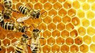 صادرات عسل بیکیفیت بازارهای هدف را نابود کرد