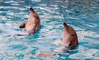 افشای ماجرای مرگ دلفین دلفیناریوم برج میلاد/ مقصران حادثه چه کسانی هستند؟