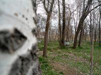 7راهکار فائو برای جنگلهای آسیبدیده آسیا و ایران