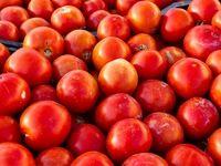 ماجرای گوجههایی که خراب شد ولی صادرات نشد