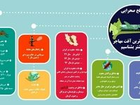 همه چیز درباره ملخهای خطرناکی که به ایران حمله کردهاند