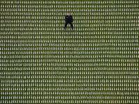 برگزاری مراسم یادبود جنگ جهانی اول در جهان +تصاویر