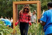 باغبانی ملانیا ترامپ در باغچه میشل اوباما +تصاویر